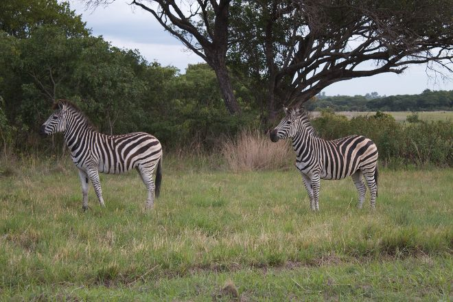 Haka Game Park, Harare, Zimbabwe